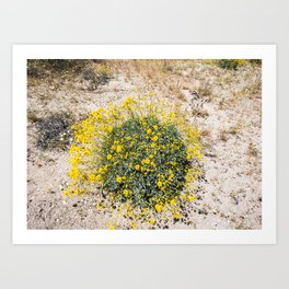 Super Bloom 7290 Paradise Joshua Tree Art Print
