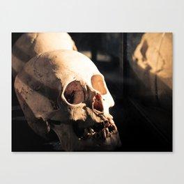 Vitrined Skull Canvas Print