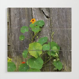 The Garden Wall Wood Wall Art