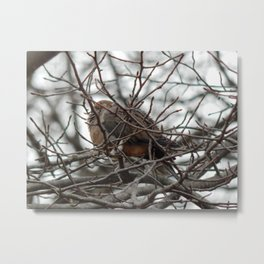 Winter nap Metal Print
