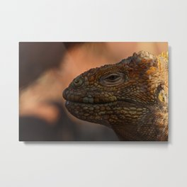 Pensive Iguana Metal Print