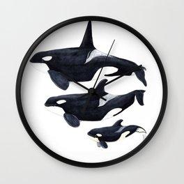 Orca (Orcinus orca) Wall Clock