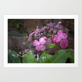 Fall Hydrangea Art Print