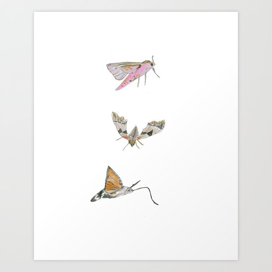 Biro and coloured pencil illustration of hawkmoths Art Print