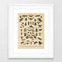 insects Framed Art Prints featuring Insects by Connie Goldman