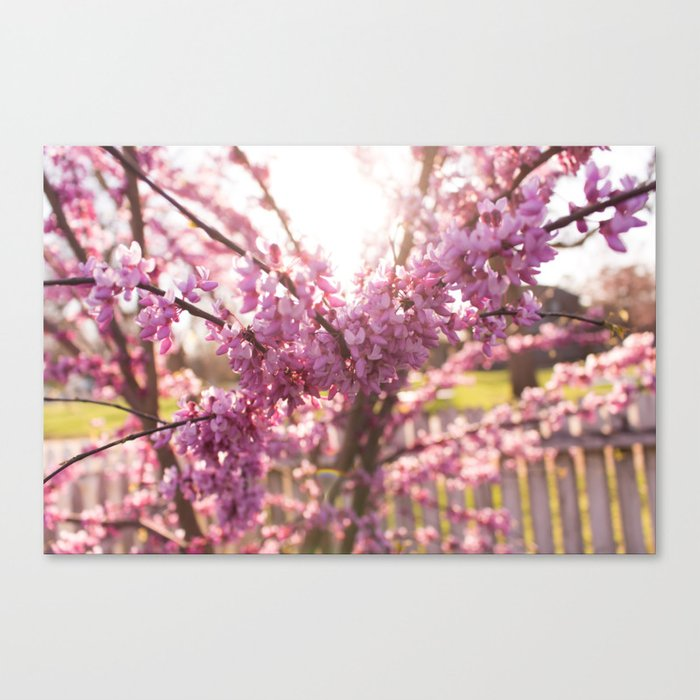 Blossoms Pt. 2 Canvas Print