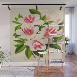Azalea Indica Vintage Botanical Floral Flower Plant Scientific Illustration Wall Mural