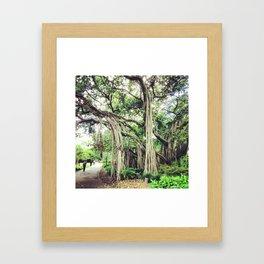 Ancient Trees  Framed Art Print