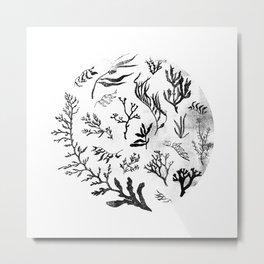 Sea Life no.2 Metal Print