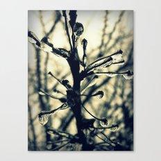 Glistening Canvas Print
