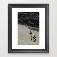 Elk on the Road Framed Art Print