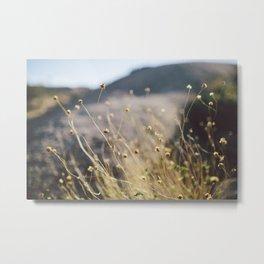 In the Desert Metal Print