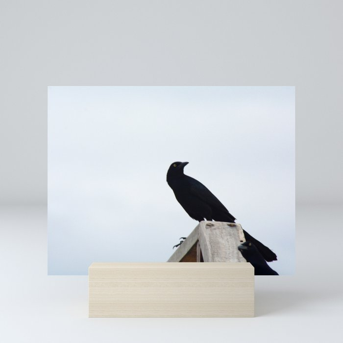 Bird collection _03 Mini Art Print