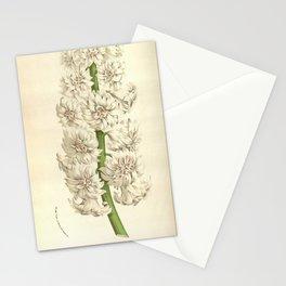 Flower hyacinthus orientalis 217 Stationery Cards