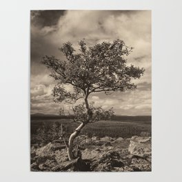 One tree in the mountains Poster