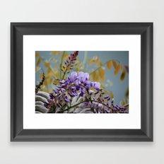 Wisteria - photography Framed Art Print