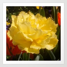 Sunny Yellow Tulip Art Print
