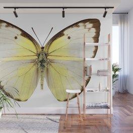 "Butterfly species Catopsilia pomona ""Lemon Emigrant"" Wall Mural"