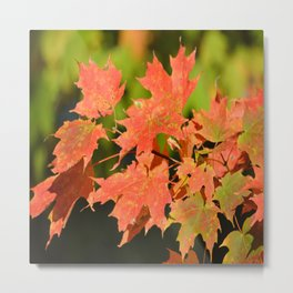 Fall Autumn Maple Leaves Red Orange Autumnal Colors Metal Print