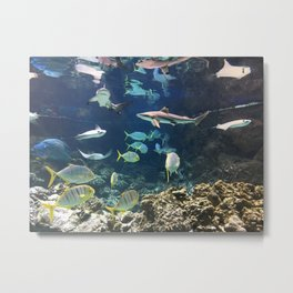 Shark's Cove Metal Print