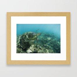 Turtle à Honolua bay Framed Art Print