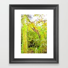 Colorful Confusion Framed Art Print