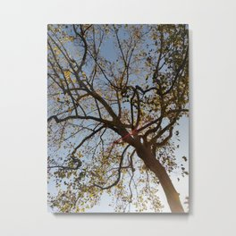 City of Trees (2017) from Roberta Winters Photography Metal Print