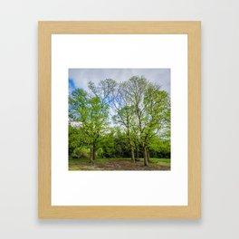 The six trees Framed Art Print