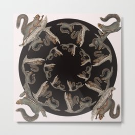 Squirrel squares the circle Metal Print