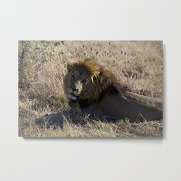Lounging Metal Print