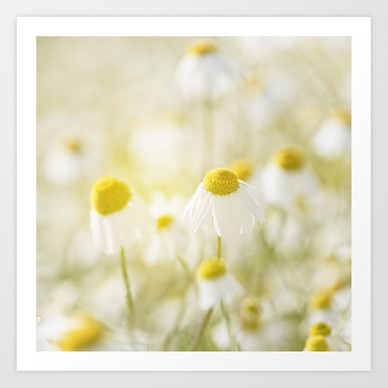 Floral Spring Meadow with Flowers Camomile and Daisies Art Print