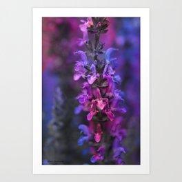 Purple Rain Of Purple Salvia Flowers Art Print