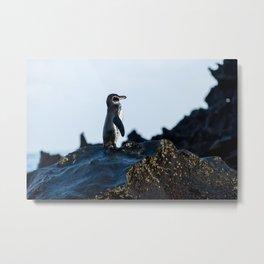 Galapagos Penguin on the Rocks Metal Print