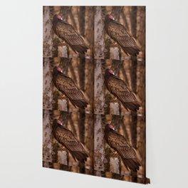Turkey Vulture In Birch Tree Wallpaper