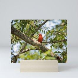 Summer Birds  Mini Art Print