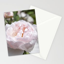Pink Cabbage Rose Stationery Cards
