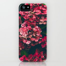 Christmas Hydrangea Red Floral Green Leaves Supple Flowers In The Garden iPhone Case