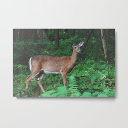 Forest Deer XIV Metal Print