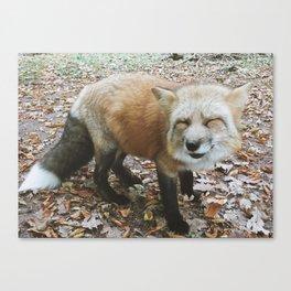 foxy Canvas Print