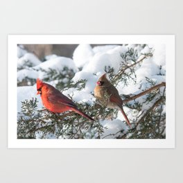 Sunny Winter Cardinals in the Adirondacks Art Print