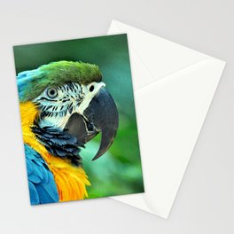 Colorful macaw parrot Stationery Cards