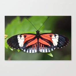 The Mutant Enemy Canvas Print