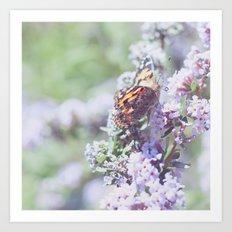 . butterfly . Art Print