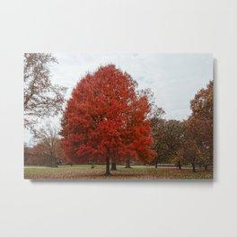 NYC Fall Tree Metal Print