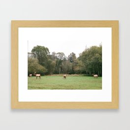 Elk in Humboldt Framed Art Print
