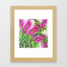 Callistemon Framed Art Print