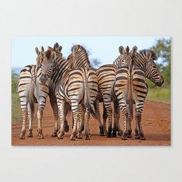 Zebras - Africa wildlife Canvas Print