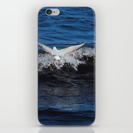 Black Headed Gull Donegal iPhone Skin