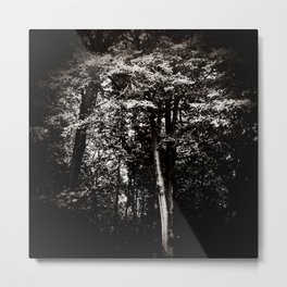 Out of the Night - The Light Forest Metal Print