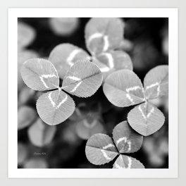 Clover Leaves Art Print